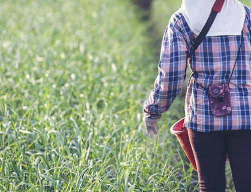 La agricultura poco atractiva para dedicarse a ella
